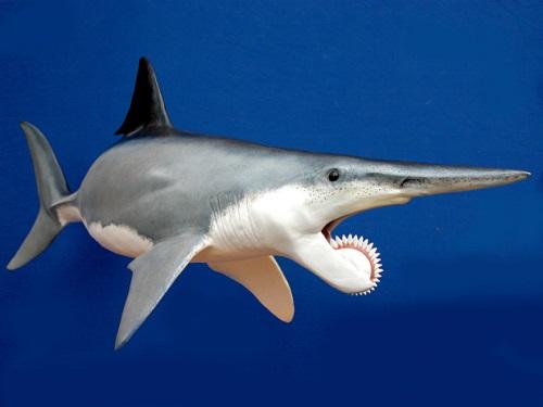 Những loài vật có hàm răng đáng sợ nhất thế giới