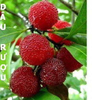 ảnh quả mọng,trái cây