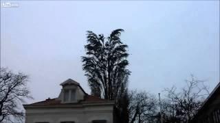 Hàng nghìn con chim bay ra từ một cái cây
