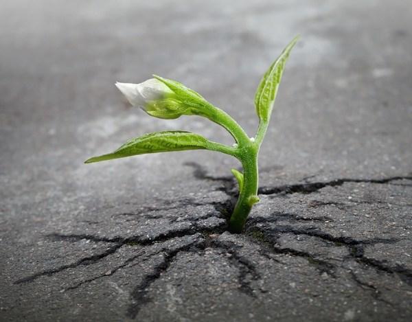 Những triết lý sống đáng suy ngẫm từ những loài cây kiên cường