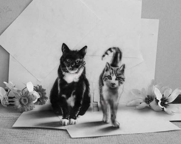 Hai con mèo như bước ra từ trang giấy