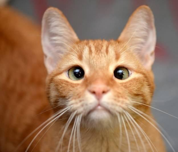 ảnh mèo,vật nuôi,thú cưng,loài mèo