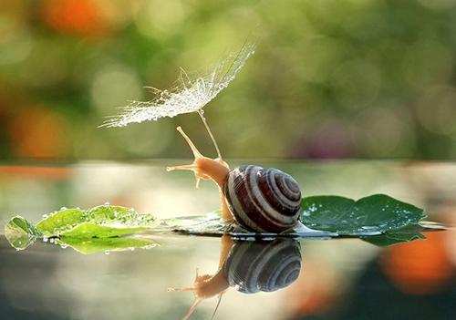 25 bức ảnh kì diệu thay đổi hoàn toàn cái nhìn của bạn về loài ốc sên