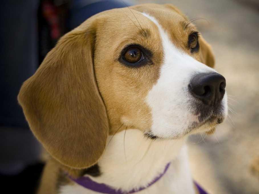 10 loài chó tuyệt vời nhất thế giới