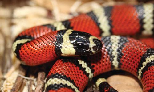 10 loài vật kinh dị nhưng vô hại