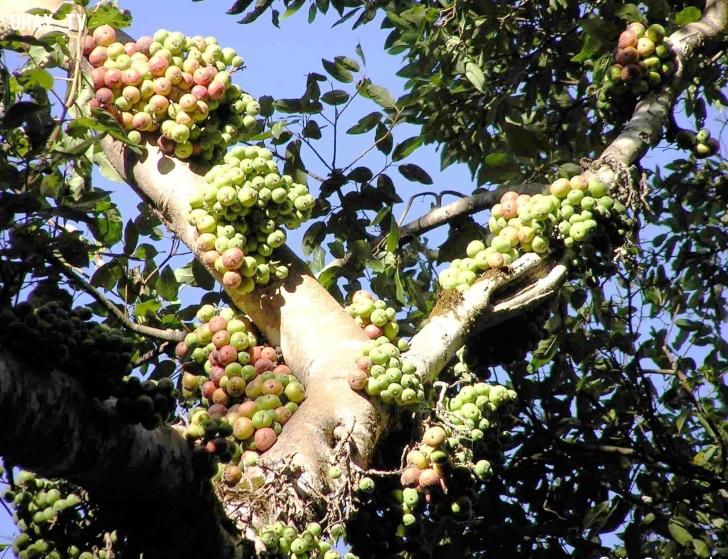 ảnh các loại cây,hoa quả