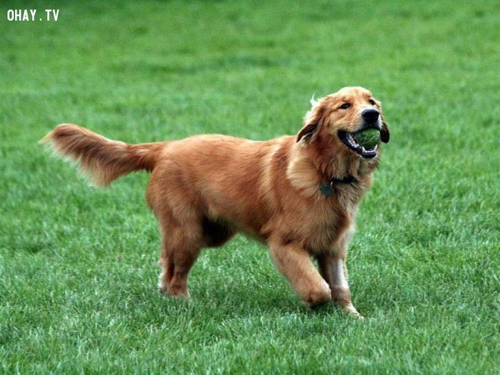 ảnh chó,vật nuôi,thú cưng
