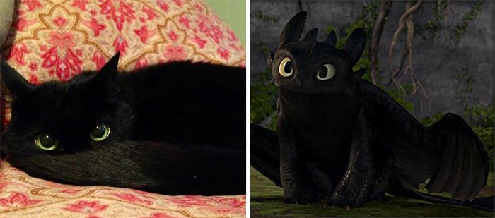 ảnh Mèo,Ngộ nghĩnh,nổi tiếng,lạ