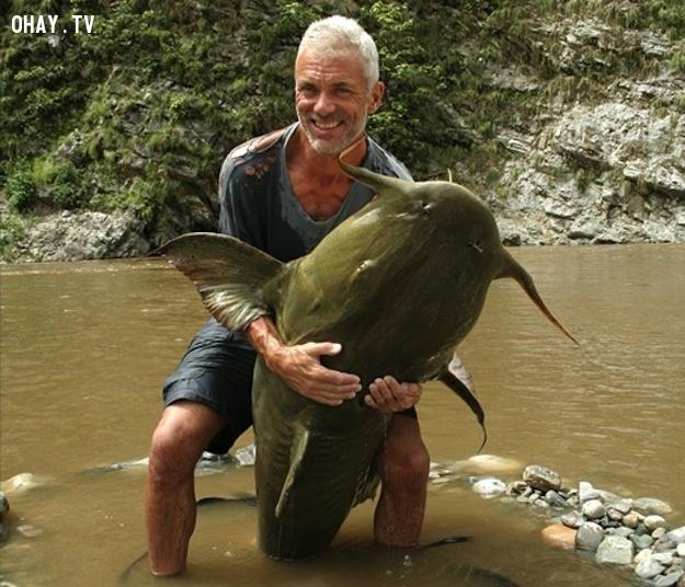 Cá da trơn Ấn Độ (Gooch)