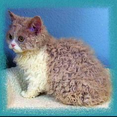 ảnh Loài mèo,đẹp dễ thương,vật nuôi,mèo
