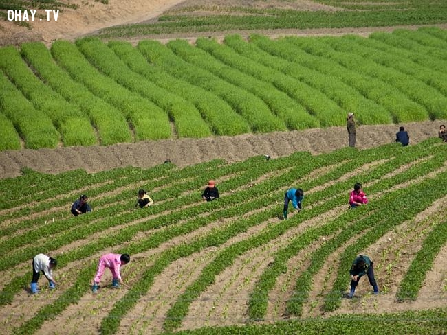 Những bức hình mà Bắc Triều Tiên không muốn phơi bày ra thế giới