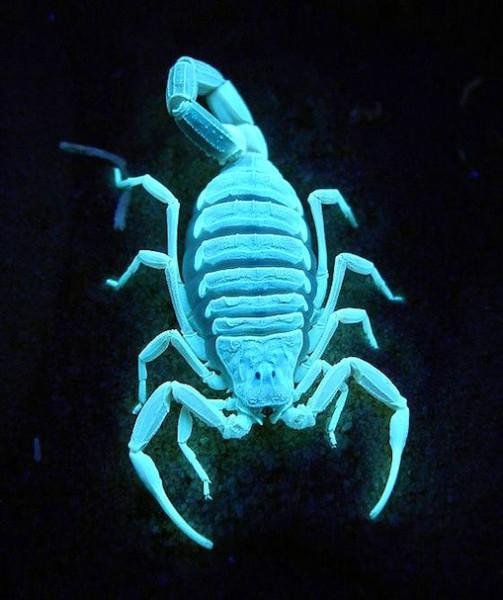 ảnh động vật phát sáng,thế giới động vật
