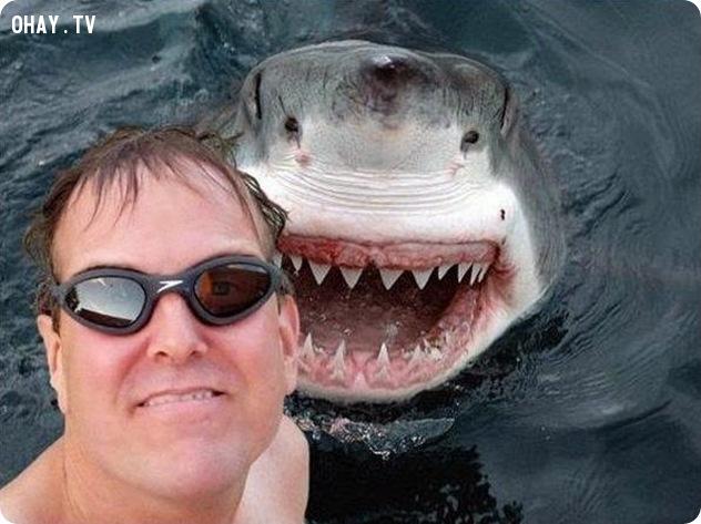 selfie cùng cá mập