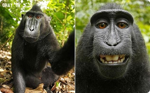 tinh tinh selfie