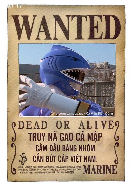 ảnh ảnh chế,ảnh cá mập chế,cá mập cắn cáp quang,ảnh chế cá mập,đứt cáp quang