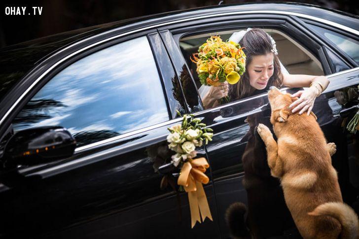 ảnh ảnh cưới,cặp đôi,đám cưới