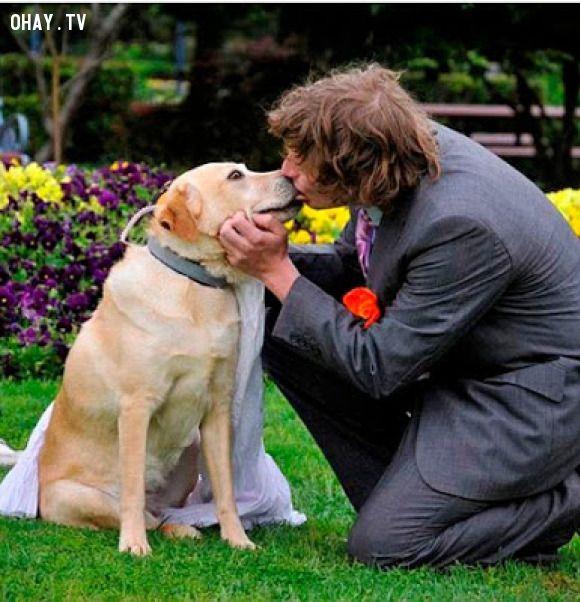 ảnh kết hôn,lễ cưới,động vật,người cưới động vật