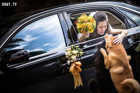 Chiêm ngưỡng những tấm ảnh cưới tuyệt đẹp và xúc động trên khắp thế giới trong năm 2014