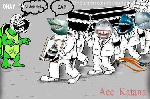 Ảnh chế cá mập cắn đứt cáp quang