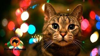 Tổng hợp khoảnh khắc vui nhộn của các chú mèo trong những ngày đầu năm 2015