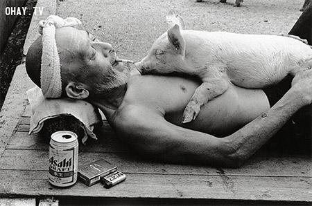 """Bộ ảnh \""""Tình bạn thân thiết\"""" của người nông dân và 1200 chú heo"""