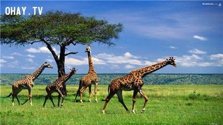 ảnh Thế giới tự nhiên,kì thú,động vật