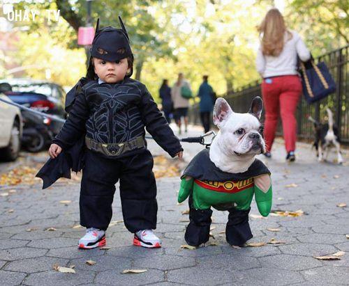 ảnh thú cưng,vật nuôi,chó