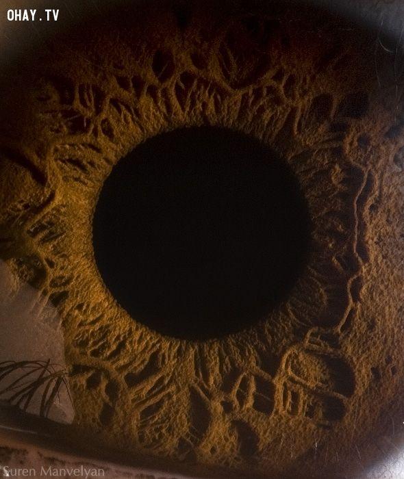 ảnh mắt,Suren Manvelyan,hình ảnh đôi mắt,cận cảnh đôi mắt