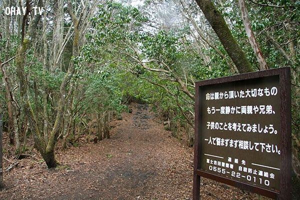 """Rừng Aokigahara (Nhật Bản): Khu rừng rộng 30 km2 ở phía bắc núi Phú Sĩ này còn có tên là """"rừng Tự Sát"""" vì đây là nơi có nhiều vụ tự sát nhất Nhật Bản. Cảnh sát cho biết 247 người tìm cách tự tử ở đây năm 2010, trong số đó 54 người thiệt mạng. Con số này thực tế có thể cao hơn nhiều do nhiều người đến rừng Aokigahara nhưng lại bỏ mạng ở cánh rừng khác vì họ không biết chính xác rừng Aokigahara nằm ở vị trí nào. Sau khi cuốn tiểu thuyết Kuroi Jukai được xuất bản năm 1961 có nội dung một người tình trẻ tự sát trong rừng, người Nhật bắt đầu """"phong trào"""" tự sát tại rừng Aokigahara với con số 50 – 100 người chết vì tự sát mỗi năm."""