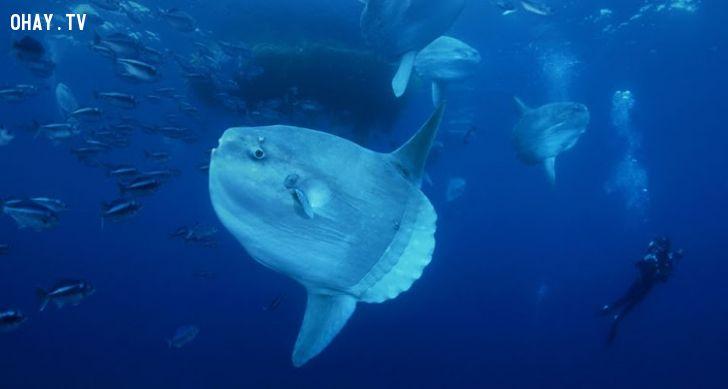 ảnh động vật,động vật biển,các loài cá,chúa tể đại dương