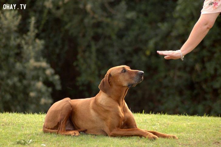 ảnh chó,vật nuôi