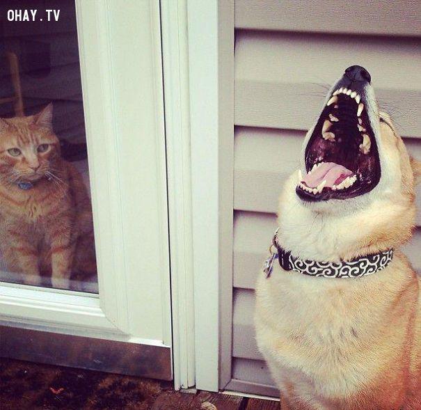 ảnh chó,vật nuôi,chó cưng,động vật