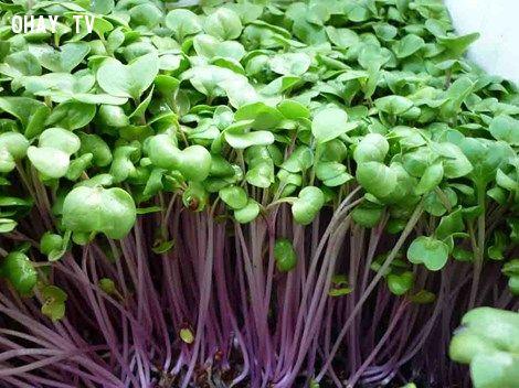 ảnh công dụng,thực phẩm,rau củ,rau xanh