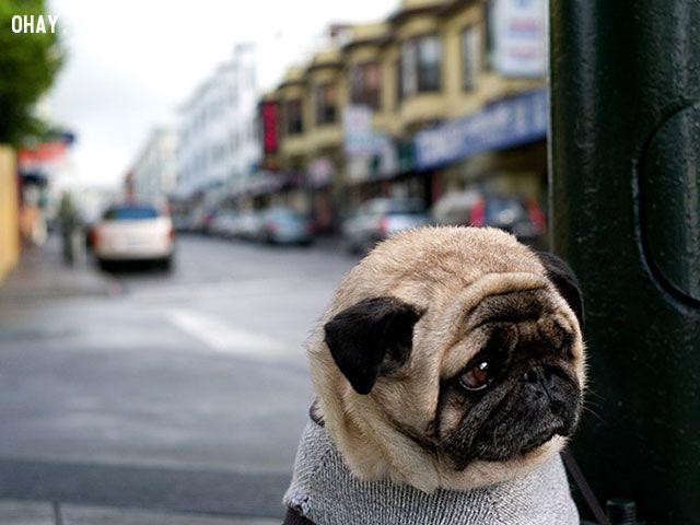ảnh động vật,buồn chán,vật nuôi