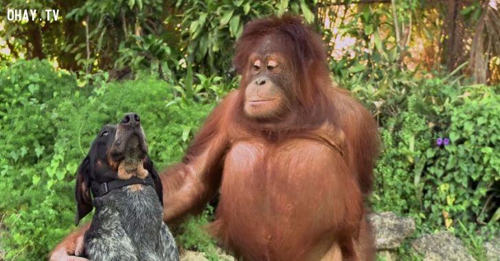 tình bạn giữa những loài động vật