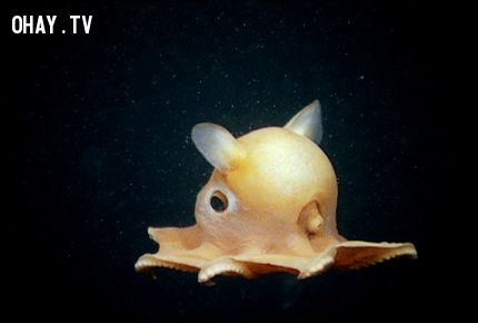 ảnh Sinh vật lạ,cá mập yêu tinh,hải miên,rận ăn lưỡi