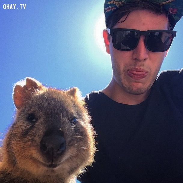 This quokka is keeping it real.