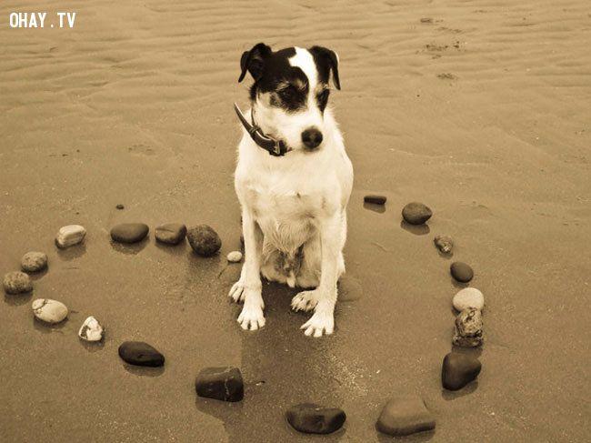 ảnh chó,thú nuôi,lợi ích,lý do