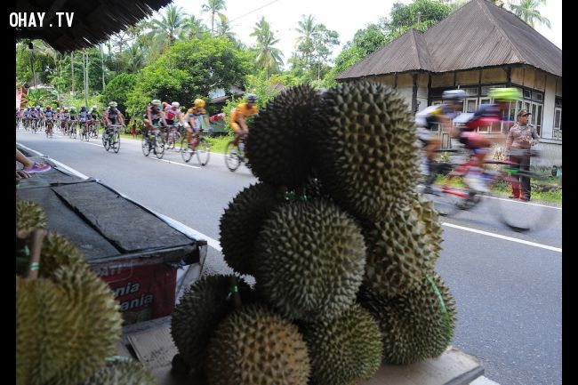 Những quả sầu riêng của Indonesia