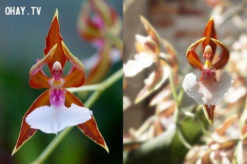 ảnh hoa,hoa đẹp,hoa lạ,thực vật
