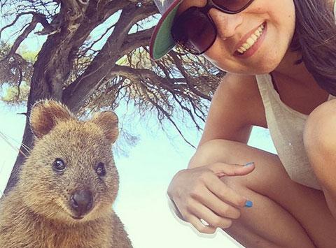 Xu hướng chụp ảnh selfie cùng Quokka - Loài vật hạnh phúc nhất hành tinh