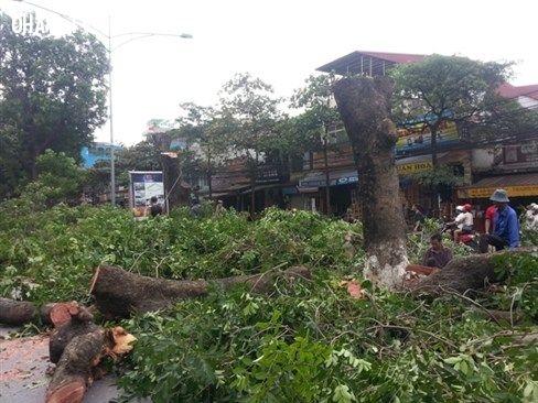ảnh cây xanh,Hà Nội,chặt cây