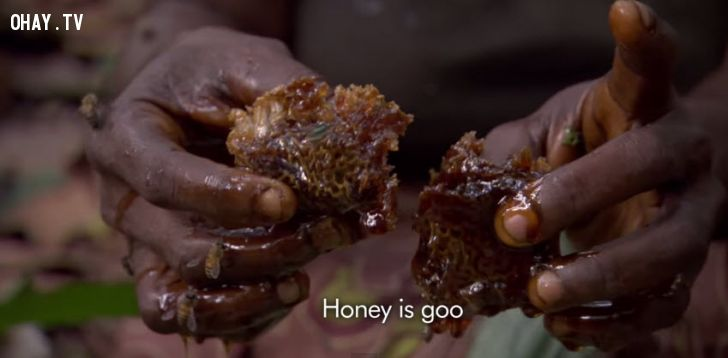 ảnh khó tin,hái mật ong,thế giới đó đây,rừng congo