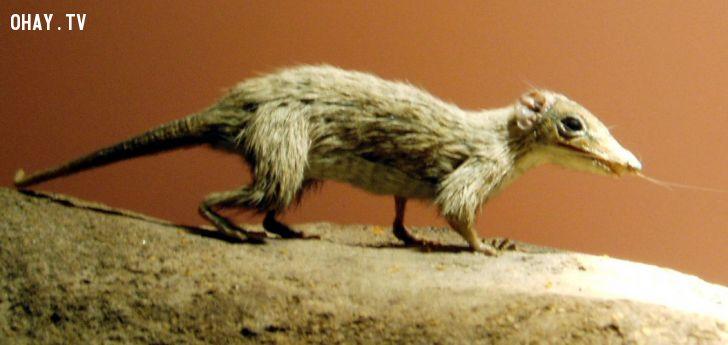 ảnh khủng long,bò sát,thằn lằn,tiệt chủng,thế giới động vật