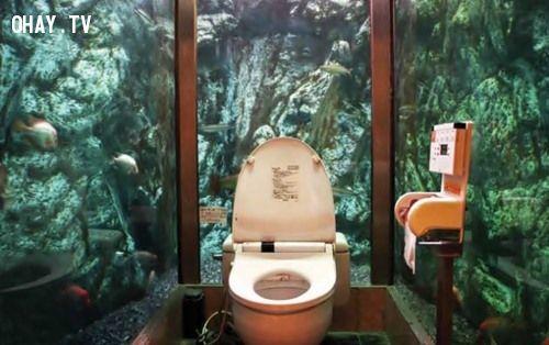 ảnh toilet,nhà vệ sinh,bồn cầu,kỳ quái
