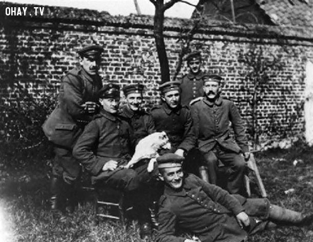 ảnh Hitler,độc tài,Đức quốc xã,Thế chiến thứ II