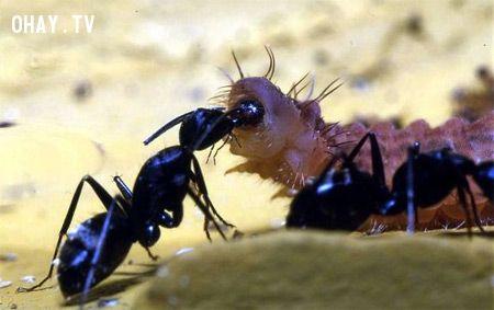 ảnh động vật,hút máu,ký sinh,vật chủ,đáng sợ,sinh vật,nguy hiểm