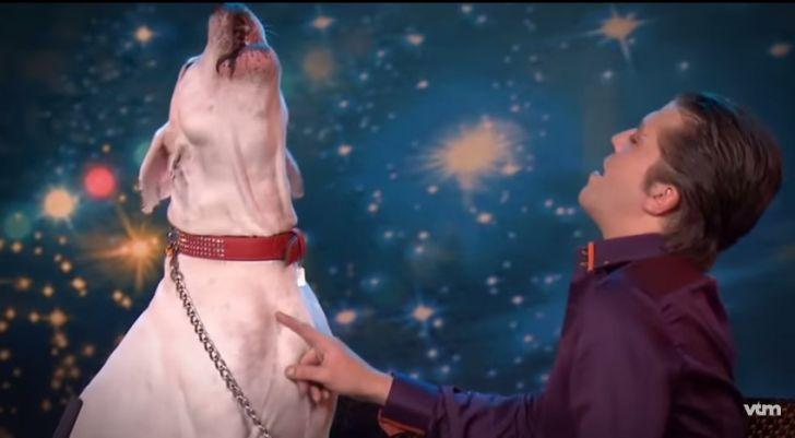 ảnh Lady Xena,chó hát,động vật