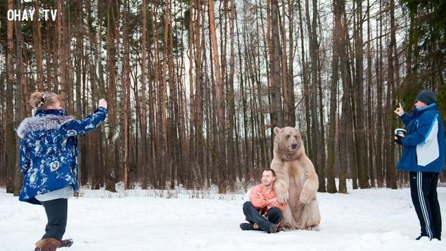 ảnh chống săn bắt gấu,bảo vệ động vật,loài gấu