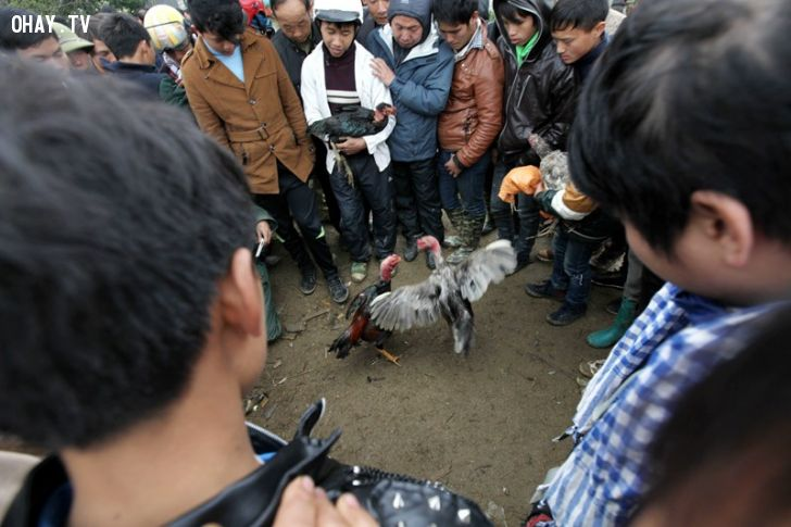 """1.Chợ """"gà chọi"""" Bắc Hà Chợ phiên Bắc Hà (thị trấn Bắc Hà, Lào Cai) những năm gần đây xuất hiện khu chợ mua bán gà chọi. Không nhất thiết mang gà đến chợ bán, nhiều người mang gà chọi đến chợ với mục đích giao lưu là chính. Thông thường, mỗi con gà chọi được bán với giá từ 1 đến 2 triệu đồng. Ảnh: Vietnamnet."""